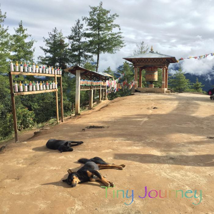 道端で昼寝する犬たち