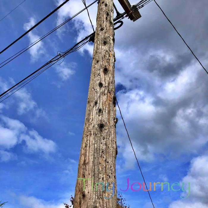 枝を落とした木で作った電柱