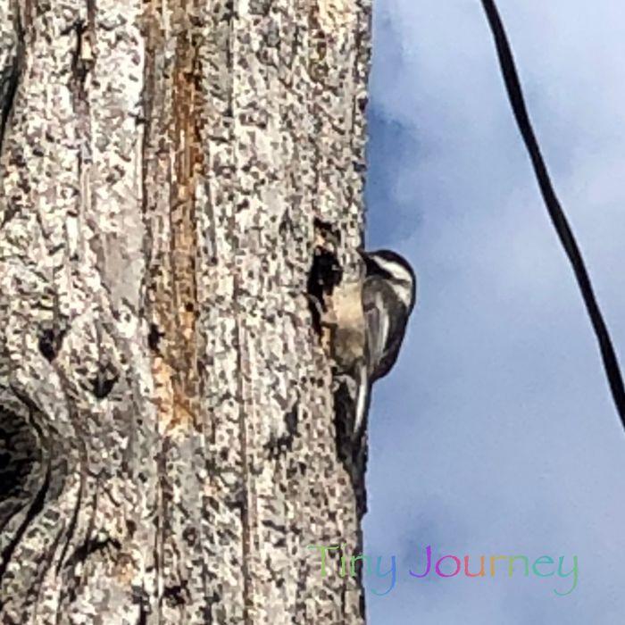 電柱に止まる小さな鳥