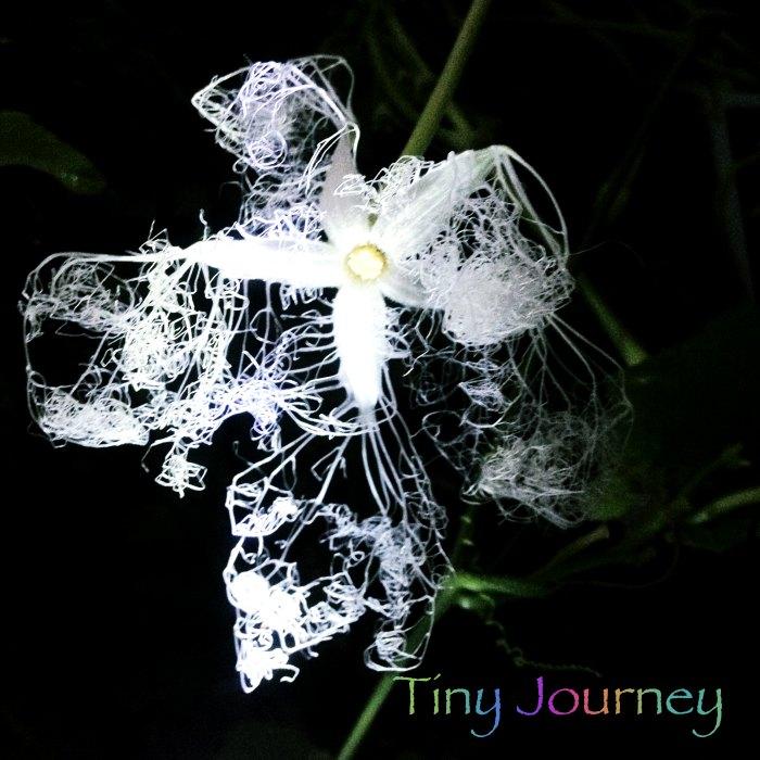 闇夜の中の白く不思議な形態の花