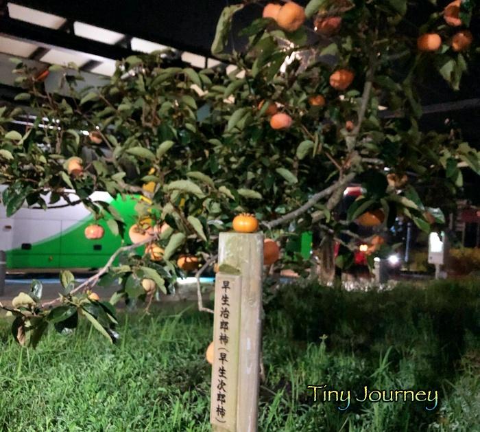遠州森町サービスエリアの早生治郎柿