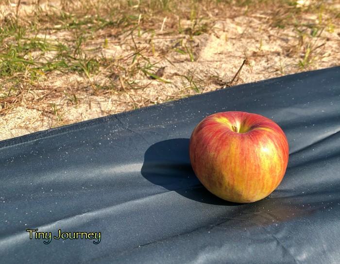 シートの上のりんご