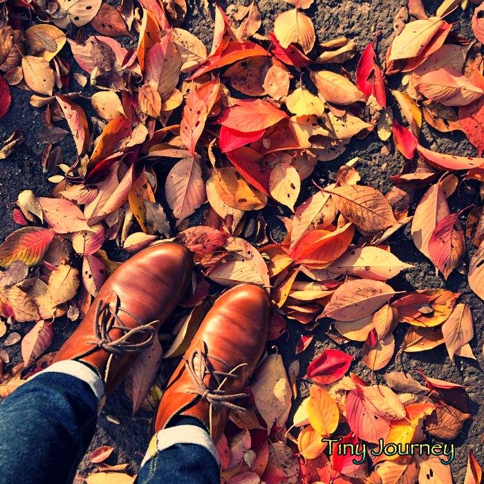 落ち葉と革靴