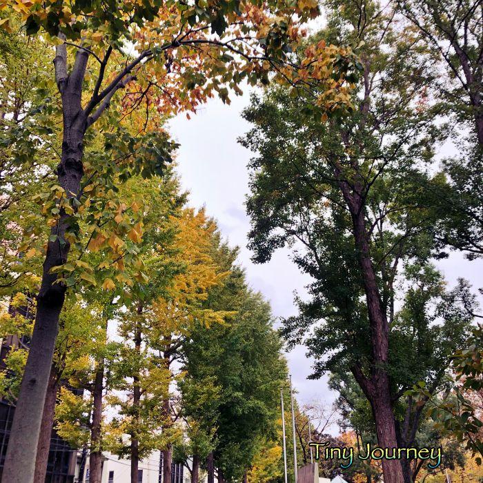 大きな木のある公園の入り口