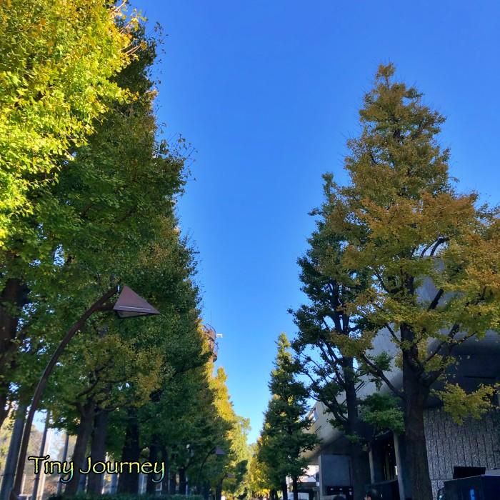 上野公園の並木と青い空