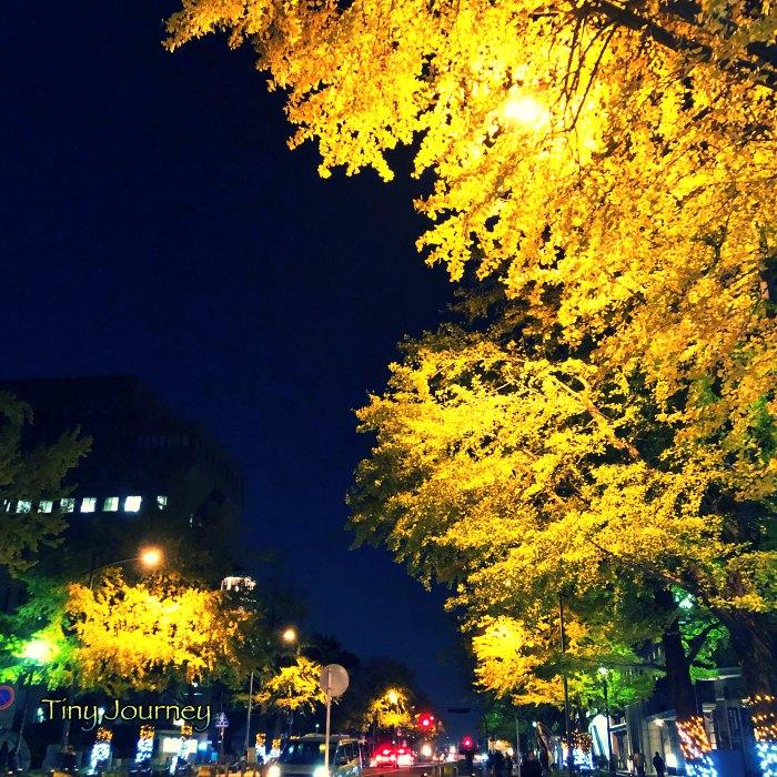 街頭に照らされる街路樹