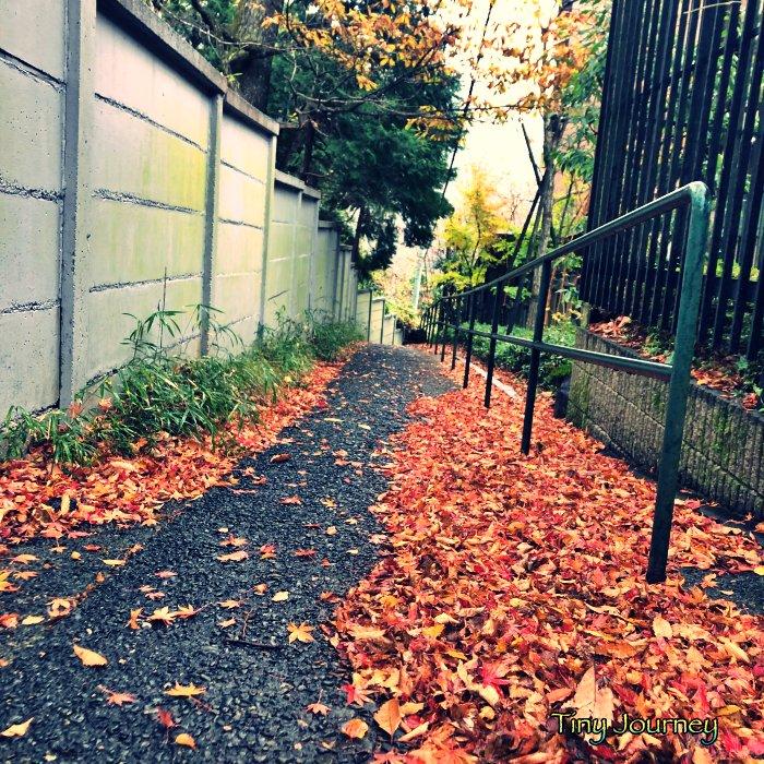 赤い落ち葉が積もった小道