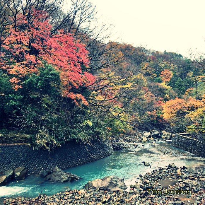 バス停近くの川と山の紅葉