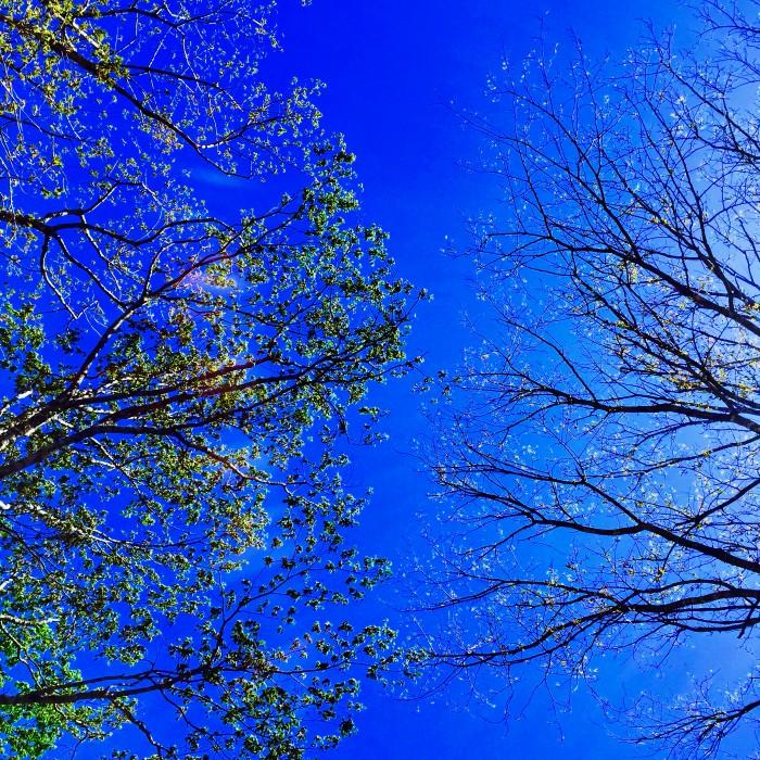 青い空と両サイドから伸びる枝葉