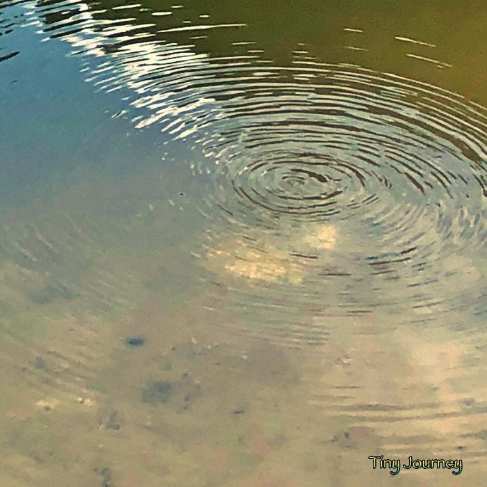 池のそこから湧き上がるガス