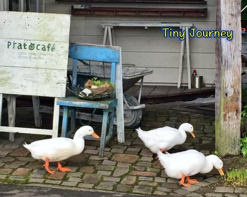 カフェの前を歩く三羽のアヒル