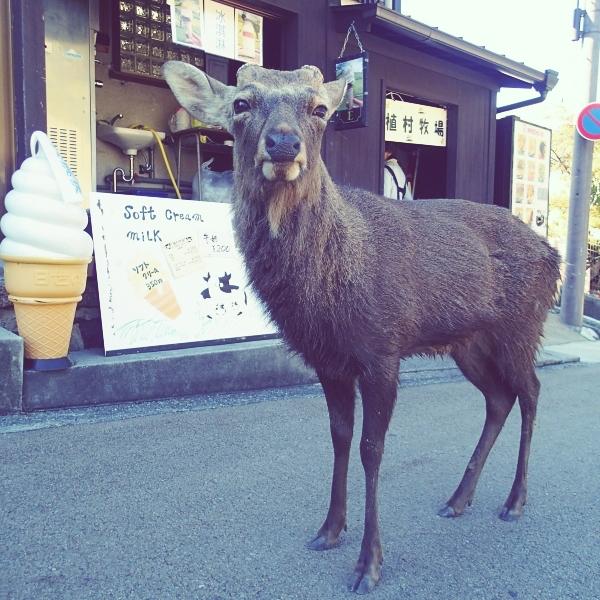 ソフトクリーム屋と牡鹿
