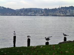 街の遠景と湖を眺める四羽の鳥