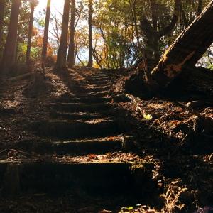 奈良・曽爾村の屏風岩公苑の山道