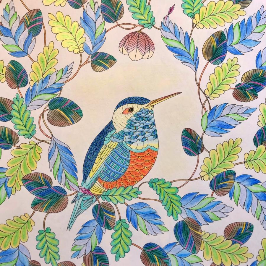 草花の中の鳥の塗り絵