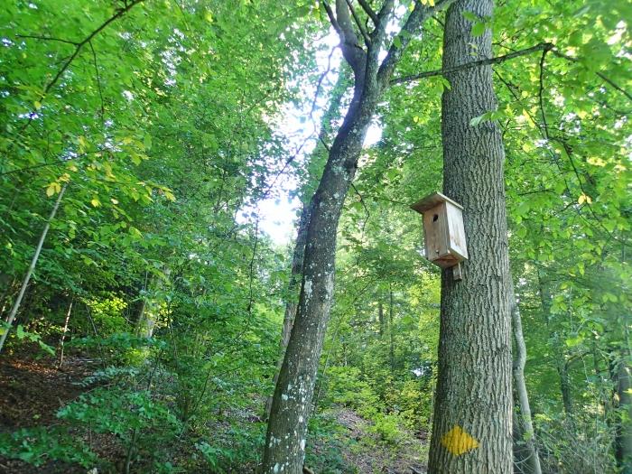 森の中に設置された鳥の巣箱