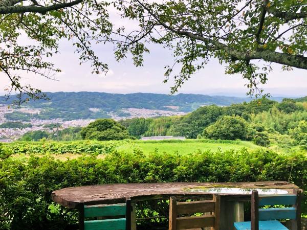 ラッキーガーデンの桜エリアから見える田園風景と山の遠景