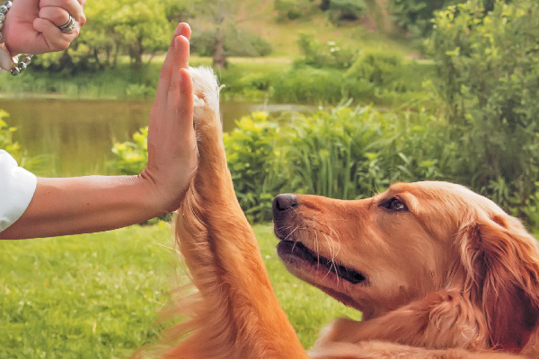 Effective Techniques for Dog Obedience Training - aaadogtraining's blog