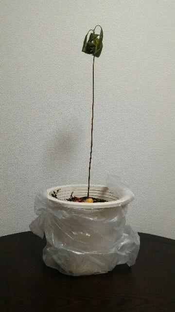 f:id:ababaikojiro:20170207232916j:plain