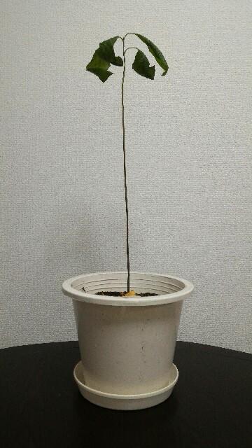 f:id:ababaikojiro:20170224230057j:plain