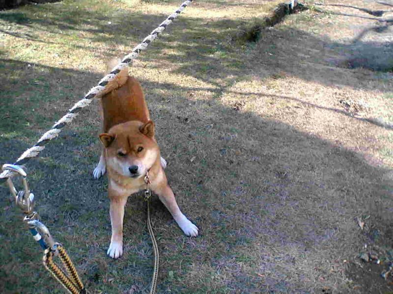 個別「[犬]警戒」の写真、画像 -...