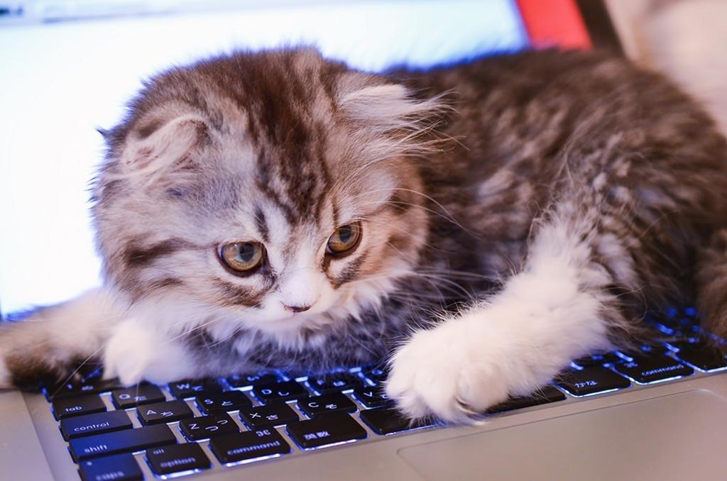 ノートPCの上の猫