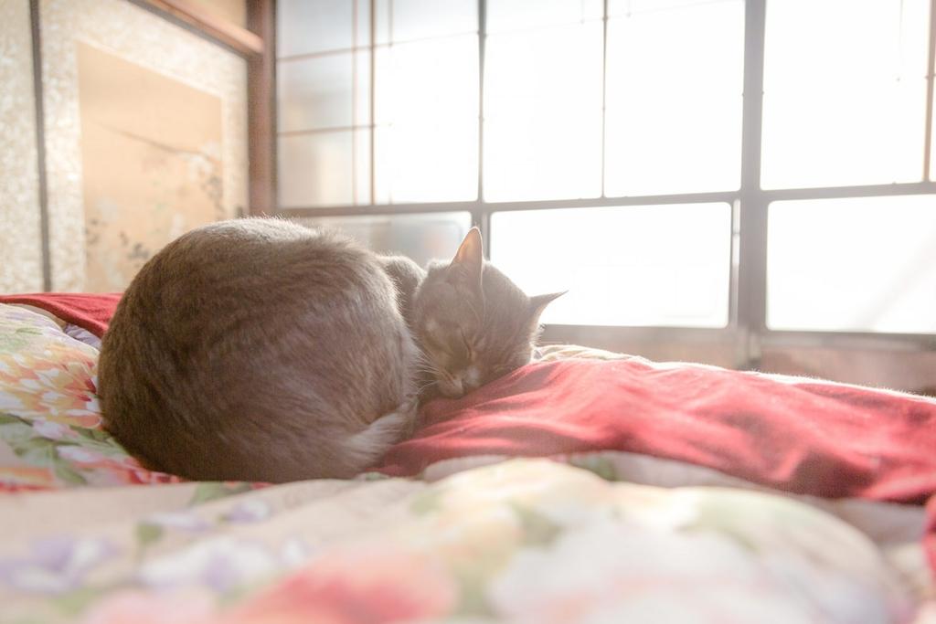 子猫のお昼寝