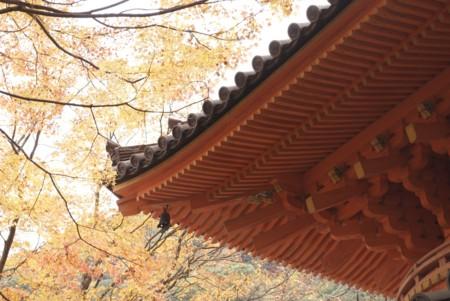 f:id:abeyoshi1969:20091130095013j:image