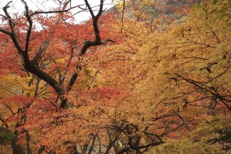 f:id:abeyoshi1969:20091130103058j:image