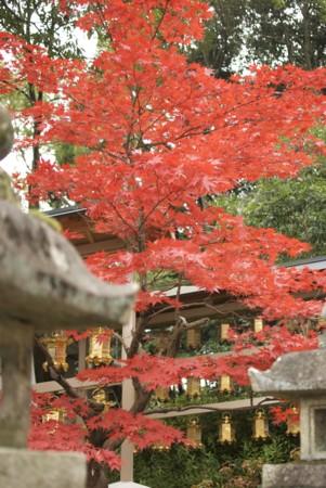 f:id:abeyoshi1969:20091130132945j:image