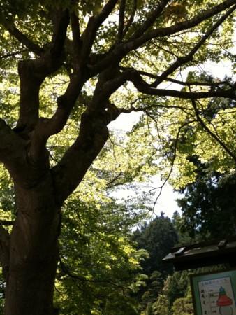 f:id:abeyoshi1969:20100610123307j:image