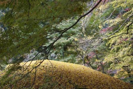 f:id:abeyoshi1969:20101123112711j:image