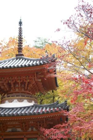 f:id:abeyoshi1969:20101123113428j:image