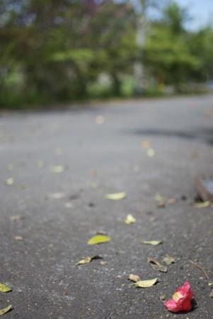 f:id:abeyoshi1969:20110505095658j:image:w360:left
