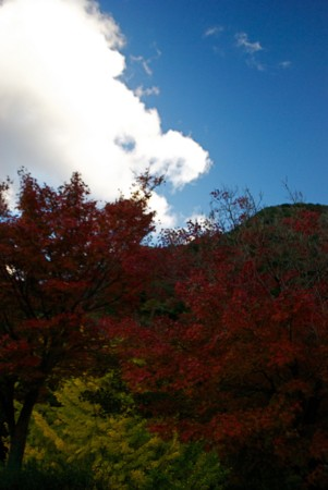 f:id:abeyoshi1969:20111124163045j:image:w360