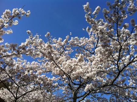 f:id:abeyoshi1969:20120412154530j:image