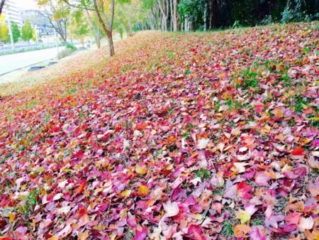 f:id:abeyoshi1969:20161123125918j:image:w360