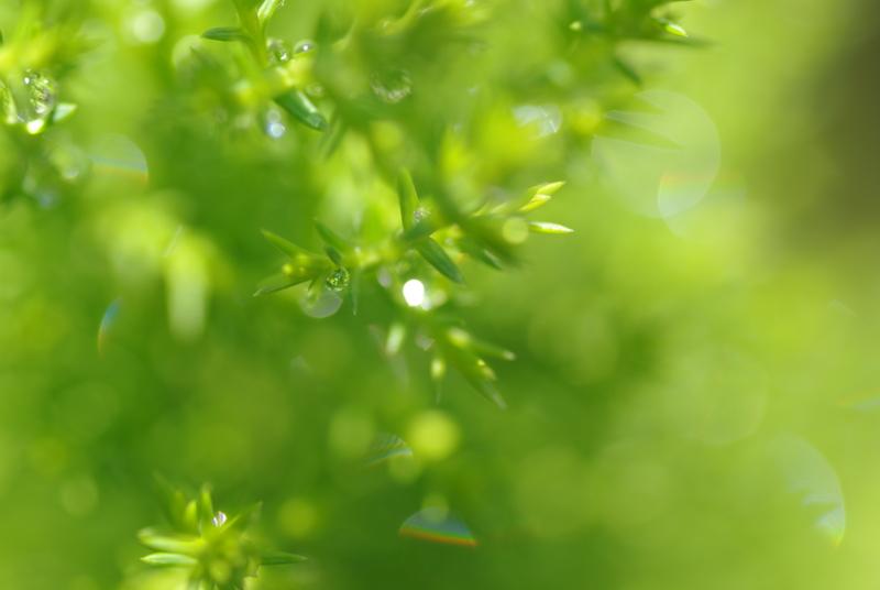f:id:abigreen:20120518134438j:image