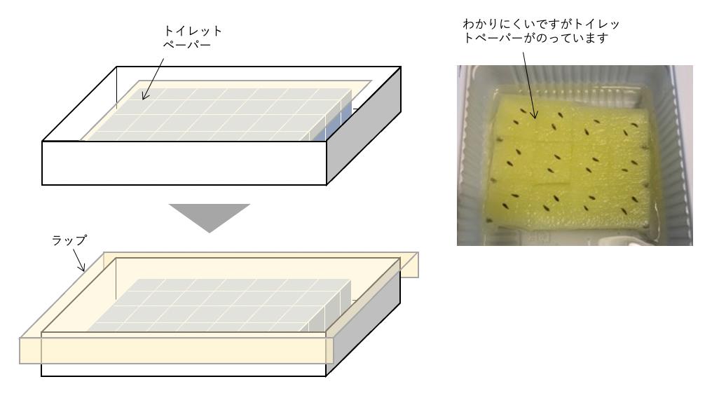 f:id:abist_maruyama:20210927152809p:plain