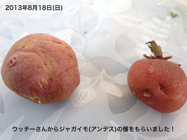 f:id:abotamaki2012:20130818225654j:image:w320