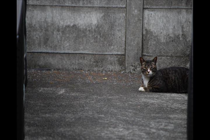 猫のお写真