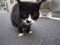 [猫]ガン見