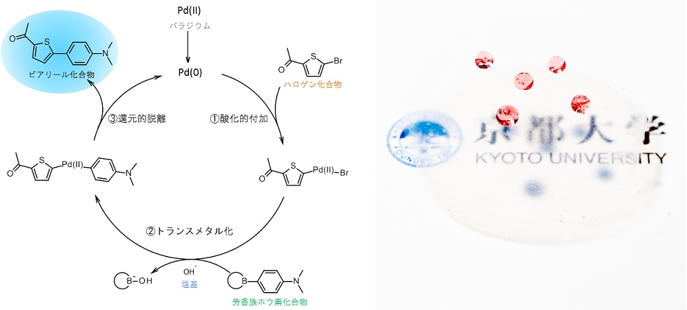 f:id:acetaminophen:20151115154924j:image