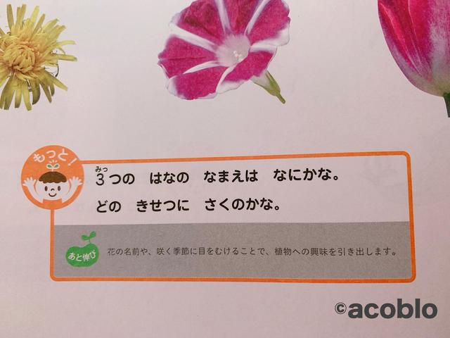 f:id:aco-blo:20200522084514j:plain