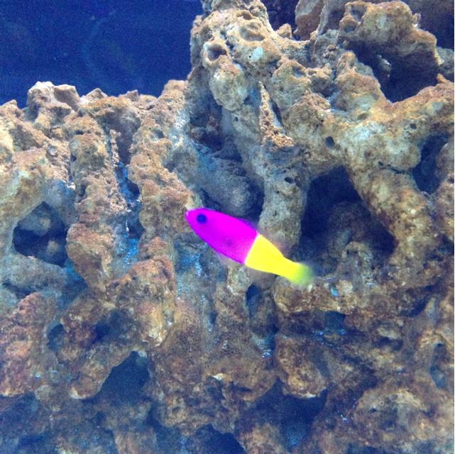すみだ水族館 水槽 熱帯魚