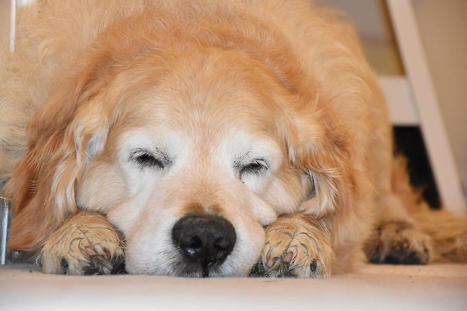 注射を嫌がる犬に簡単に注射する意外な方法