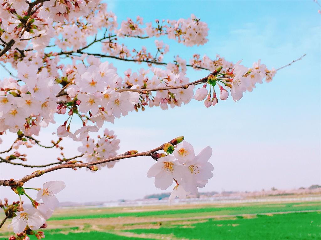 f:id:acu_qian-ming:20180410054547j:image