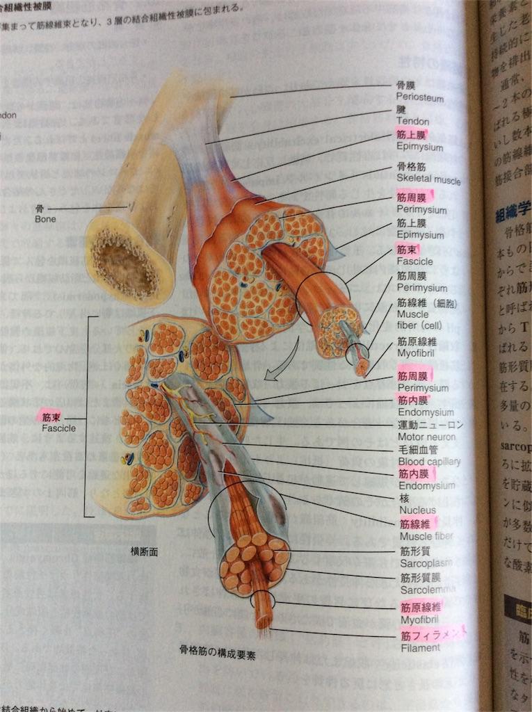 f:id:acupuncturistontheship:20180714112238j:image