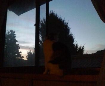夜明けを見つめるお猫さま