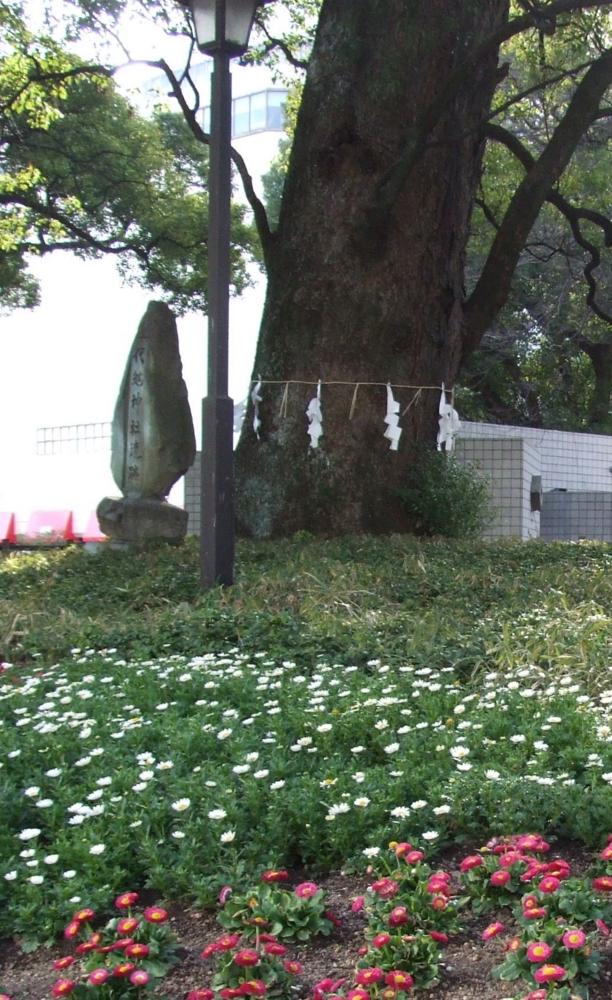 f:id:adayasu:20100222041018j:image:left